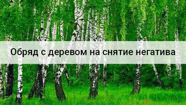 Обряд с деревом