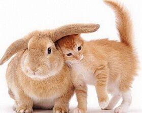 Любовный гороскоп на год кролика