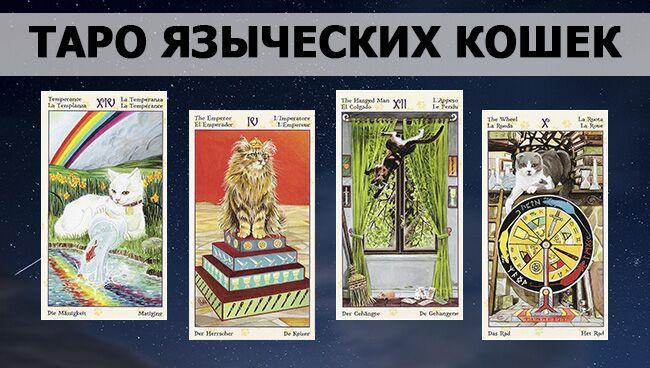 галерея Таро Языческих Кошек