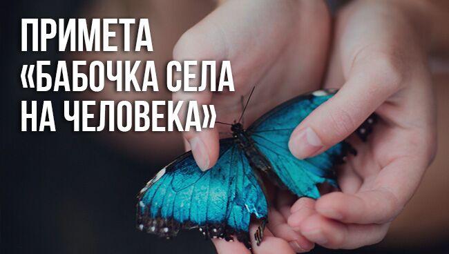 Примета «бабочка села на человека»