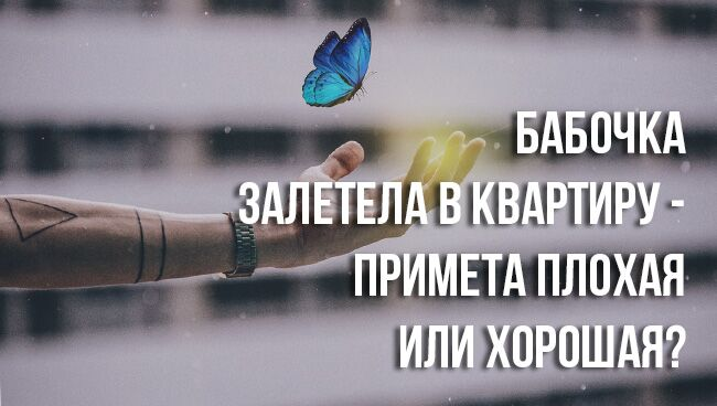 примете, если бабочка залетела в квартиру