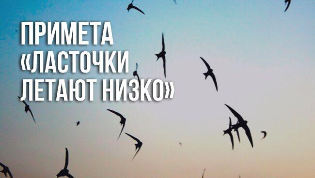 Примета «ласточки летают низко»