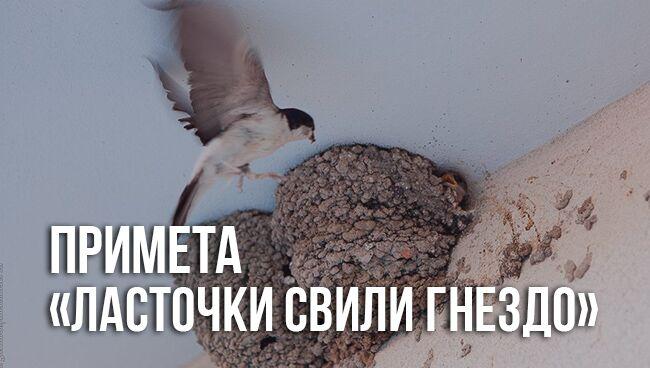 примета «ласточки свили гнездо»