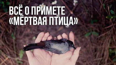 примета «мёртвая птица»