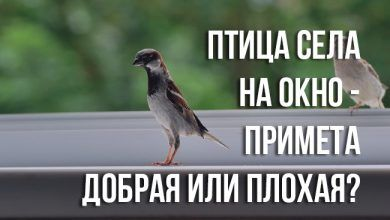 примета «птица села на окно»