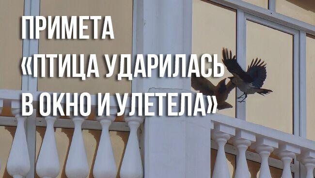 примете «птица ударилась в окно и улетела»