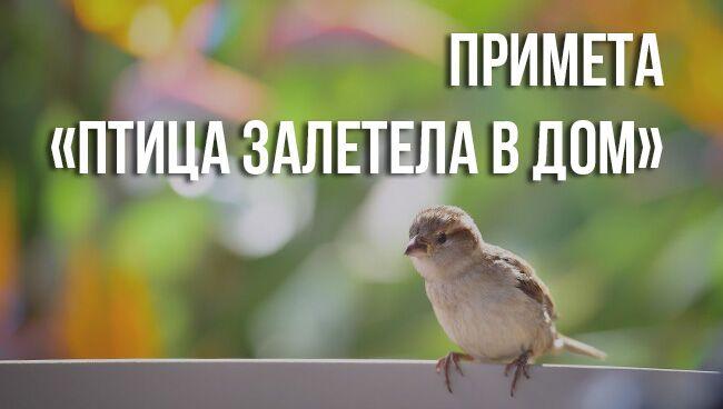 приметы «птица залетела в дом»