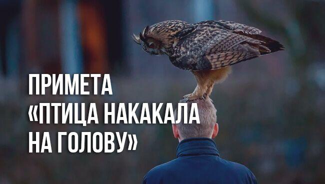 примета «птица накакала на голову»