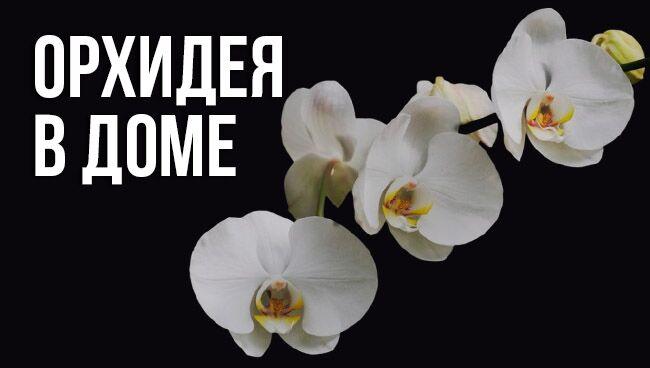 примет и суеверий об орхидее в доме