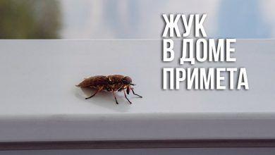 жук в доме - примета