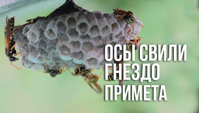 примета осы свили гнездо