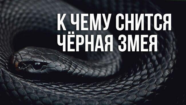 к чему снится чёрная змея