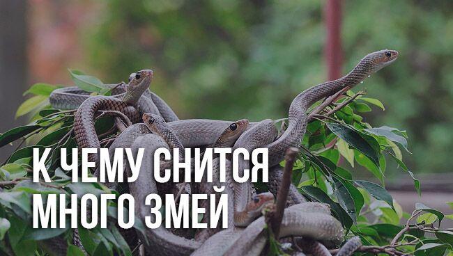 к чему снится много змей