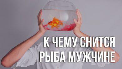 к чему снится мужчине живая рыба