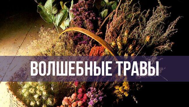 Магическая флора для охраны домашнего очага