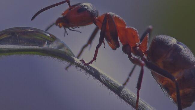 Что означает видеть во сне муравьёв