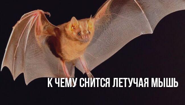 К чему снится летучая мышь