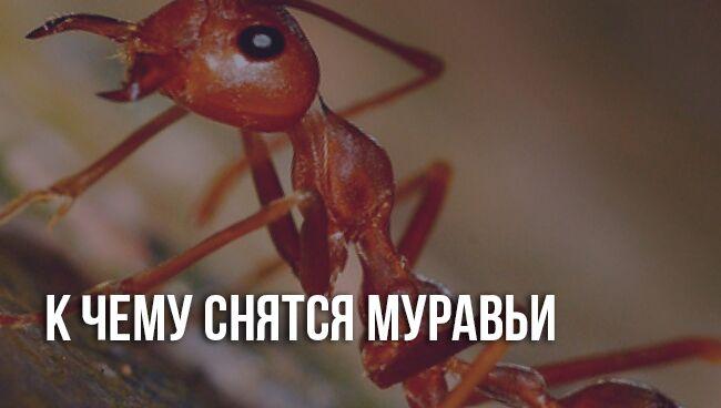 Сонники про муравьёв