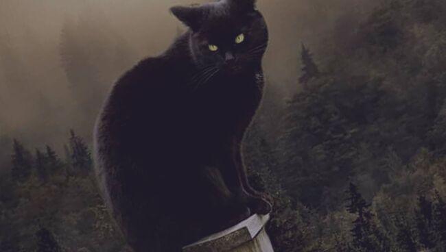 Если приснился умерший кот