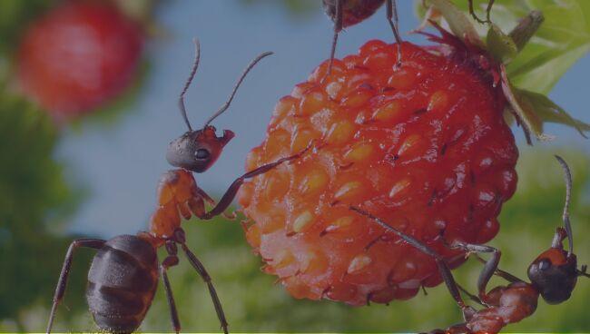 Видеть во сне много муравьёв