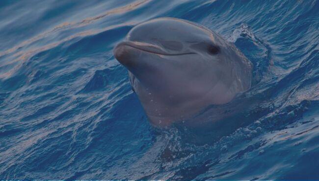 Приснился дельфин по соннику