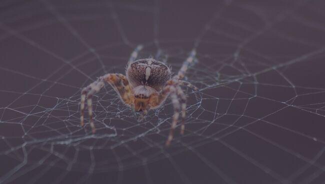 Сонники: к чему снятся пауки