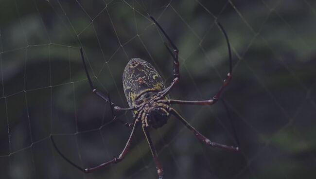 Кому снятся пауки во сне