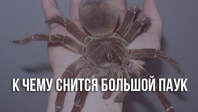 К чему снится паук: большой