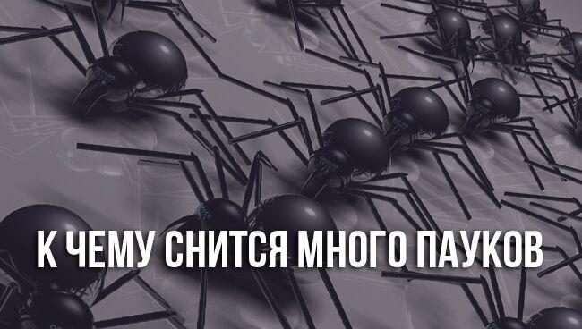 Видеть во сне много пауков