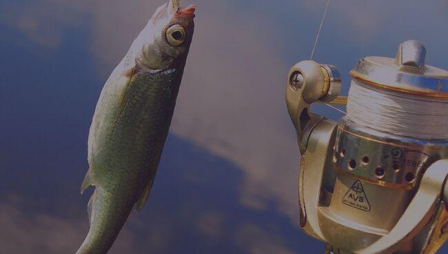 Что означает ловить во сне рыбу