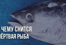 К чему снится мёртвая рыба