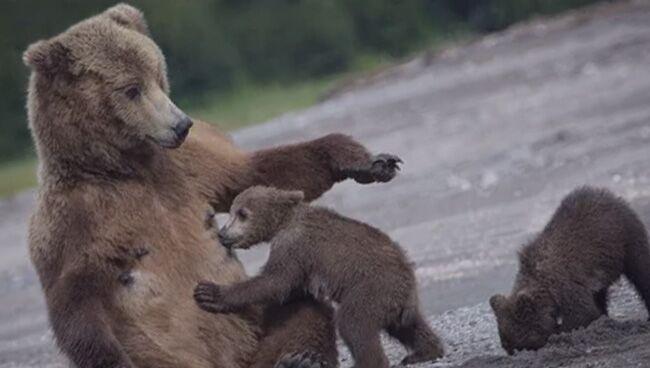 Сон про медведя что означает