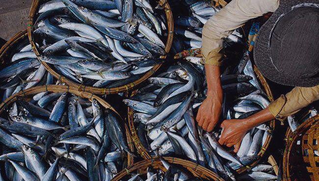 Видеть во сне свежую рыбу
