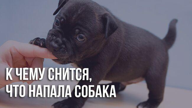 Сонник: напала собака