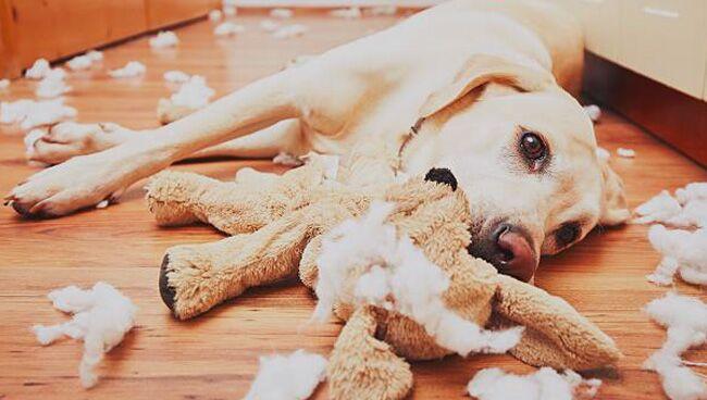 К чему снятся нападающие собаки