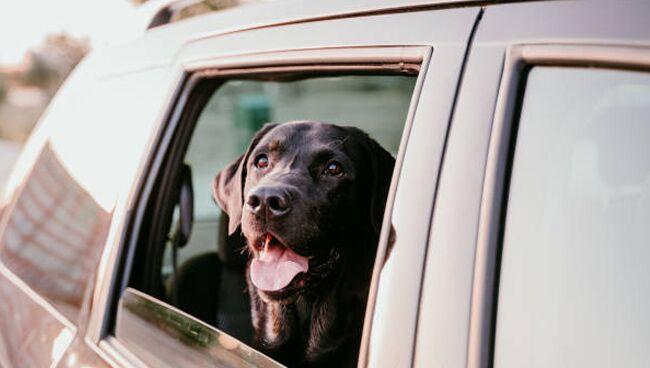 Приснилась чёрная собака