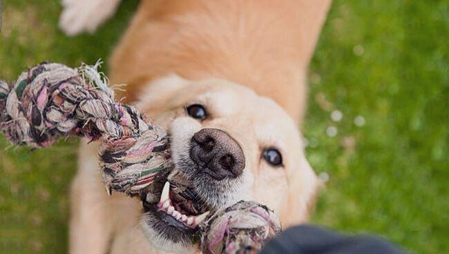 Сонник: собака нападает