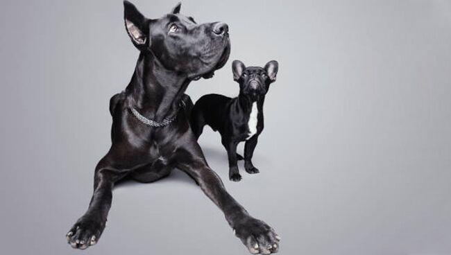 Видеть во сне большую чёрную собаку