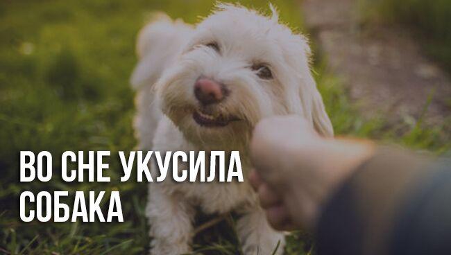 Собака кусает во сне