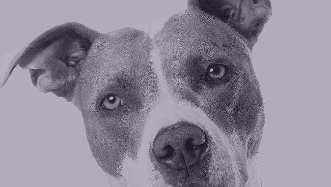 Варианты трактовки снов про большую собаку по разным сонникам