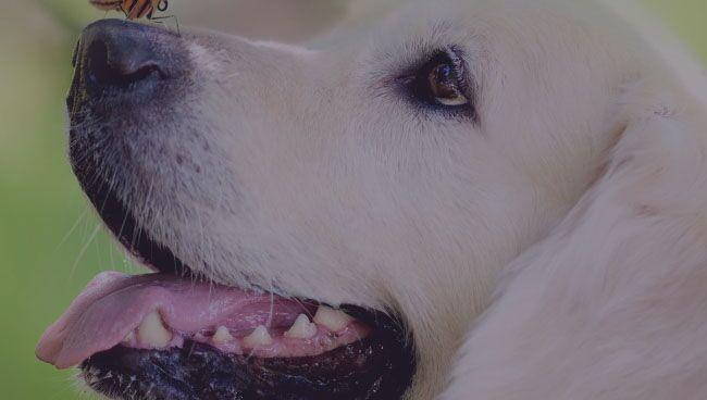 Оберег для собаки своими руками