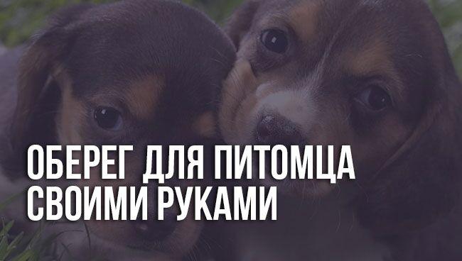 Оберег для собаки