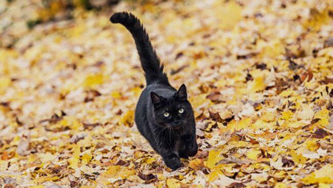 Чёрный кот во сне: что означает