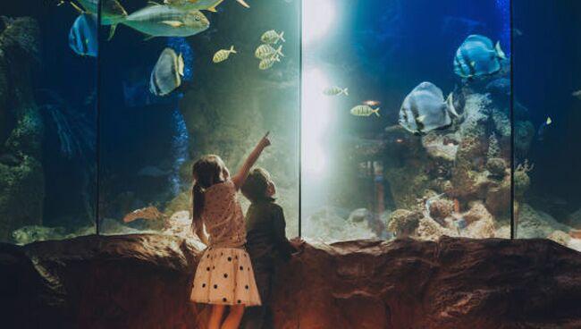 Где должен стоять аквариум по фэншуй