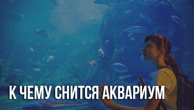 Сонник аквариум