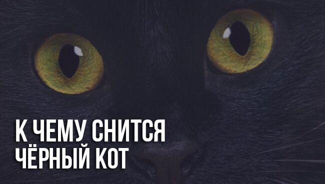 К чему снится чёрный кот