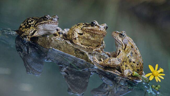 Приснилась жаба