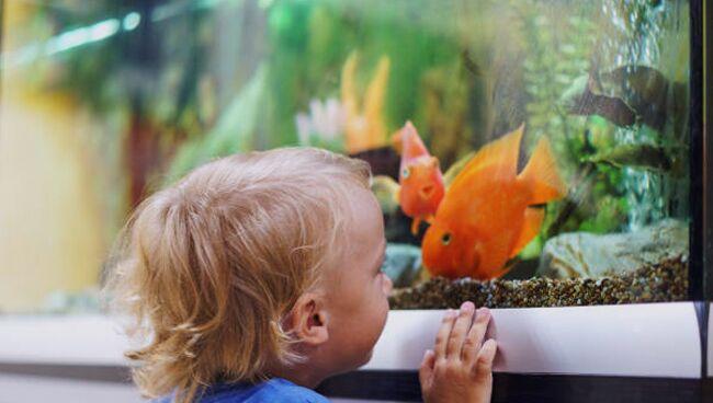 Приснился аквариум