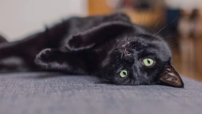 Приснился чёрный кот