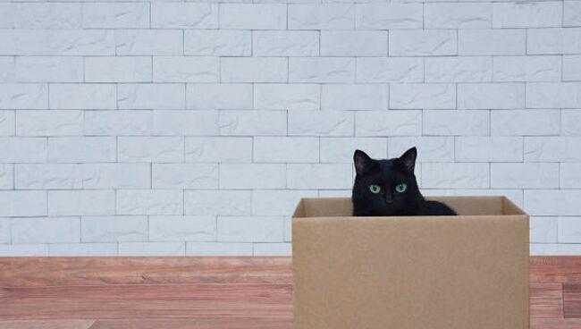 Видеть во сне чёрного кота